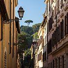 Gallivanting in Rom Italien - kleine Straße mit einer Signature Umbrella Pine von Georgia Mizuleva