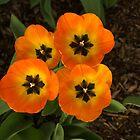 Tulip Quartet - Die Schönheit des Frühlings genießen von Georgia Mizuleva