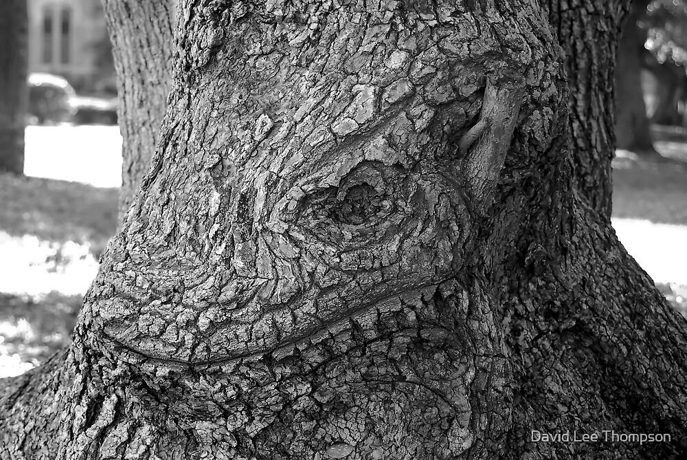 Face of oak by David Lee Thompson