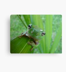 Green Tree Frog Metallbild