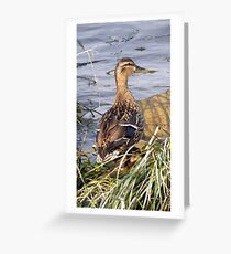 Female Duck Greeting Card