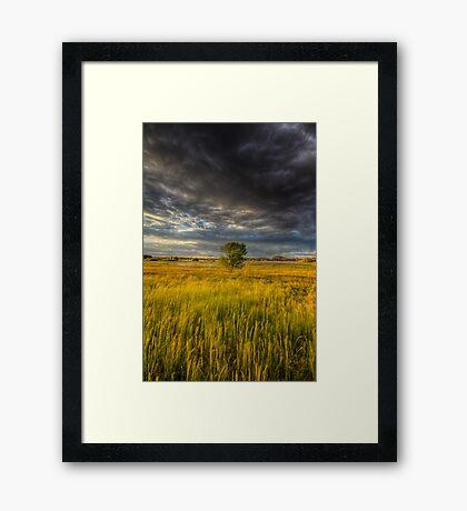 Tree vs Big Stinking Cloud Framed Print