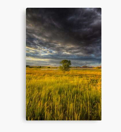 Tree vs Big Stinking Cloud Canvas Print