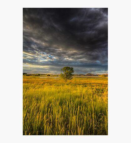 Tree vs Big Stinking Cloud Photographic Print