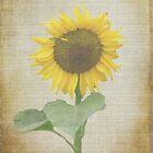 Sonnenblume von Lynn Bolt