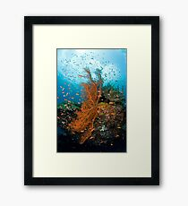 Seafan community Framed Print