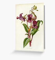 FLOWER LITHOGRAPH Greeting Card