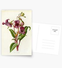 FLOWER LITHOGRAPH Postcards