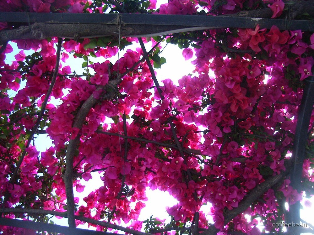 Floral Shade Of Pink by coffeebean