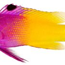 Exotic Watercolor Fish by Zehda