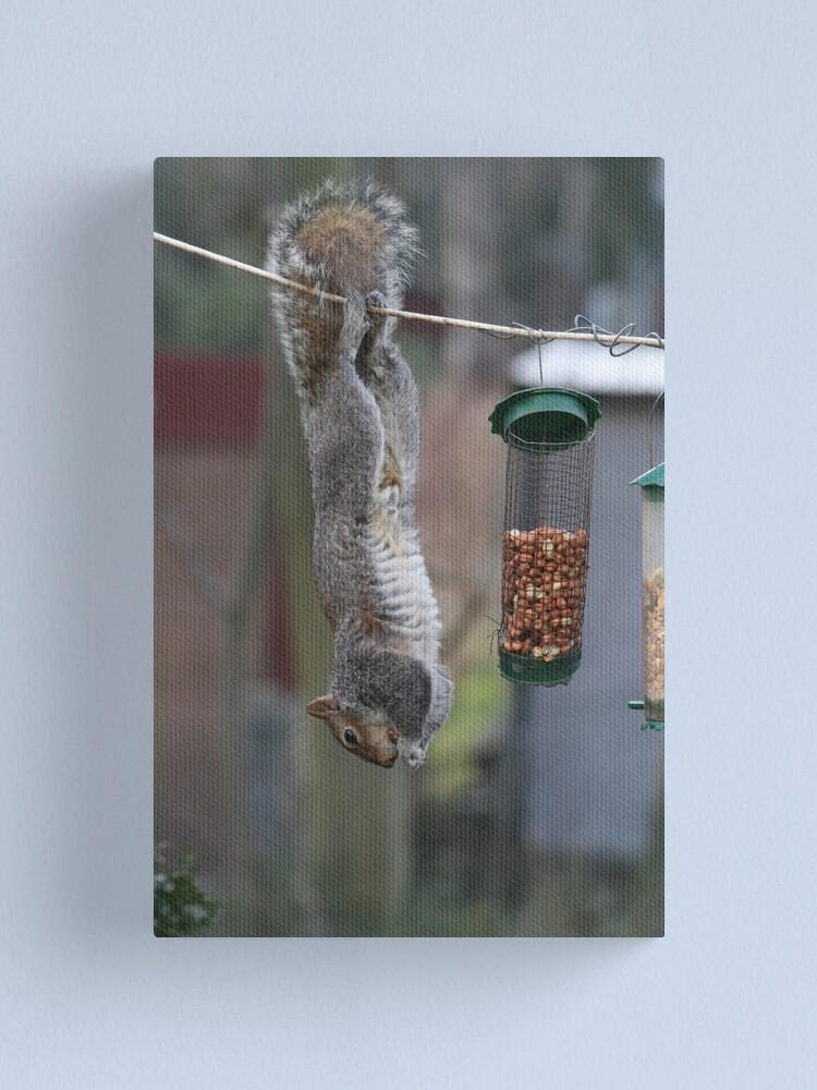 Alternate view of Squirrel 1 - Just hanging around! Canvas Print