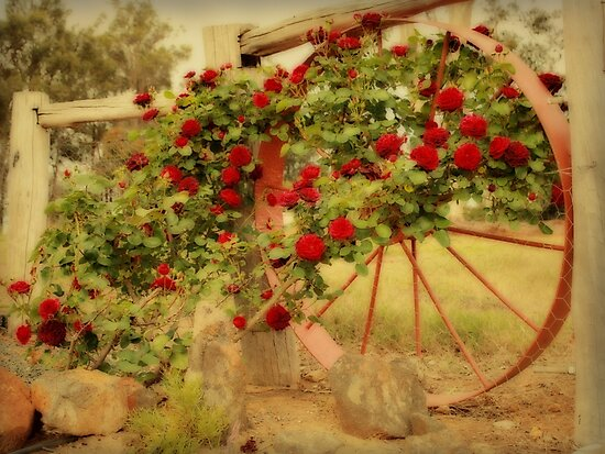 Vintage Roses by Elaine Teague