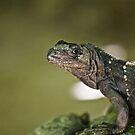 Green Iguana by Jonathan Bartlett