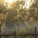 Sunrise 2 - Magpie Springs - Adelaide Hills Wine Region - South Australia by MagpieSprings