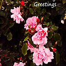 Rose Cascade Greeting card by sarnia2