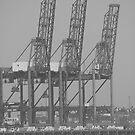 """""""Cranes"""" by Jo Ross"""