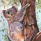 'Koala'  by Lynda Robinson