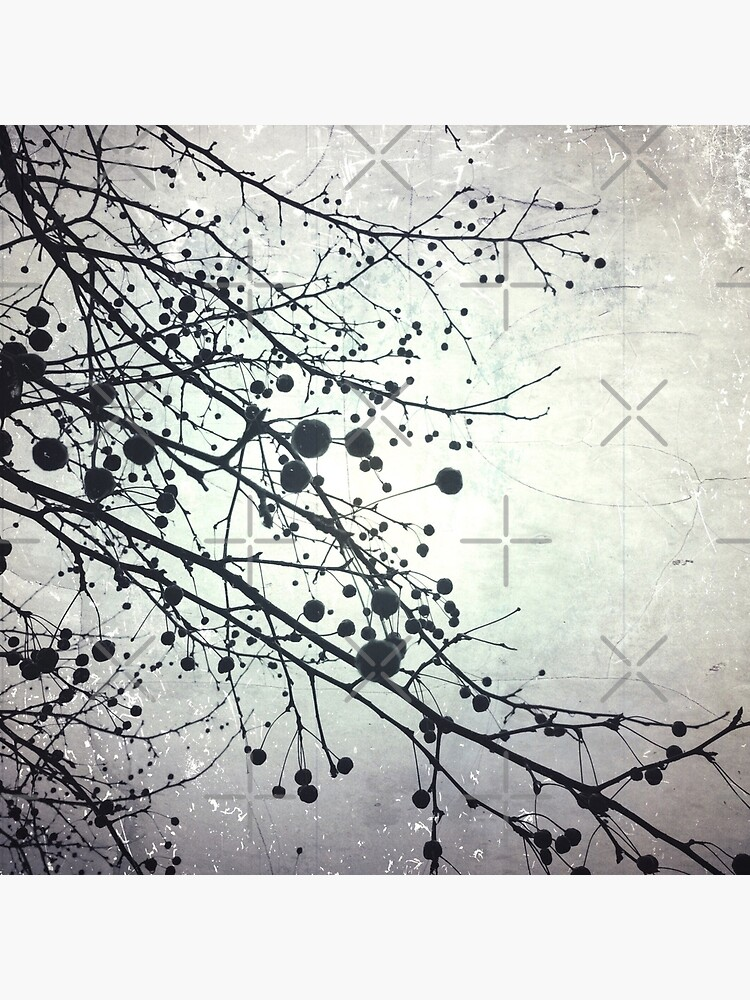 Silver Sky Photo Art  - Bare Tree in Winter - Black and White Nature Art by OneDayArt