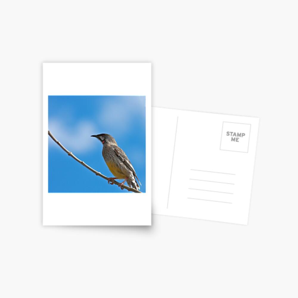 Red Wattlebird Postcard