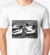 Mallard Ducks Artwork in Black, Gray and White T-Shirt