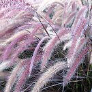 PINK GRASSES FOUND IN THE EVENING by umauma