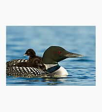 Common Loon And Chick Photographic Print