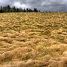 The Field by Sue  Cullumber