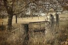 Country Gate ~ vintage by Rosalie Dale