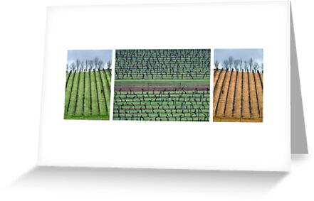 Vineyard Compilation by Ben Reynolds
