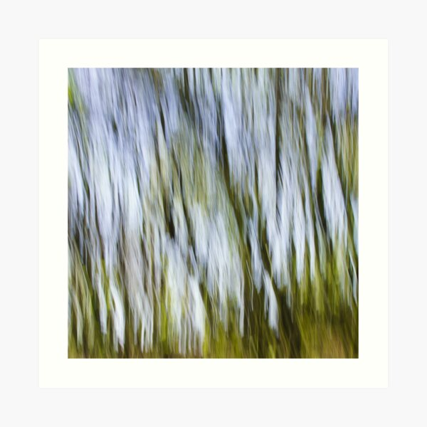 Woodland Light Art Print