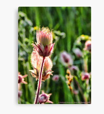Wildflowers 3 Canvas Print