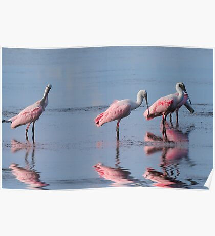 The Pink Plumage Club Poster