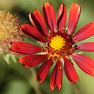 Red flower and flying insect by agenttomcat