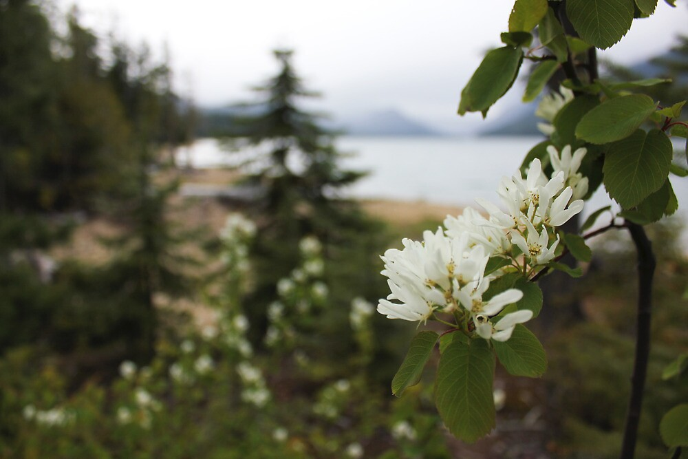 Mountain Flowers by pinklilypress