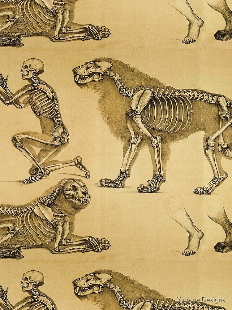 The skeletons of man and big cat compared by Geekimpact