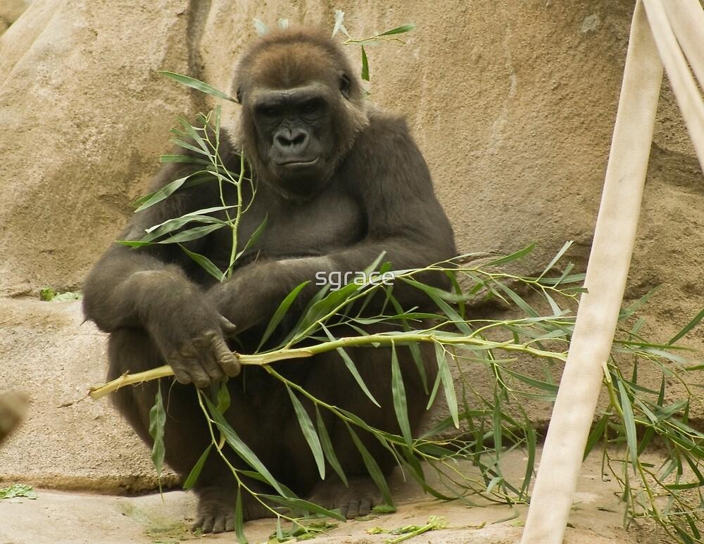 Gorilla by Sarah Grace