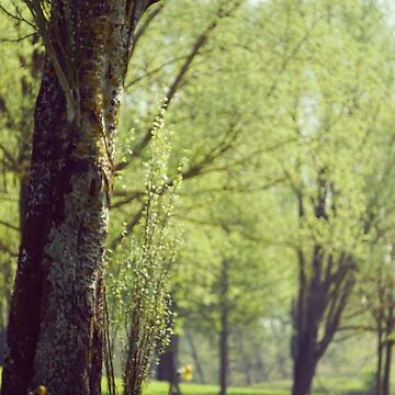 Trees in a park by vectorwebstore