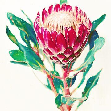 Weinlese-Protea von micklyn