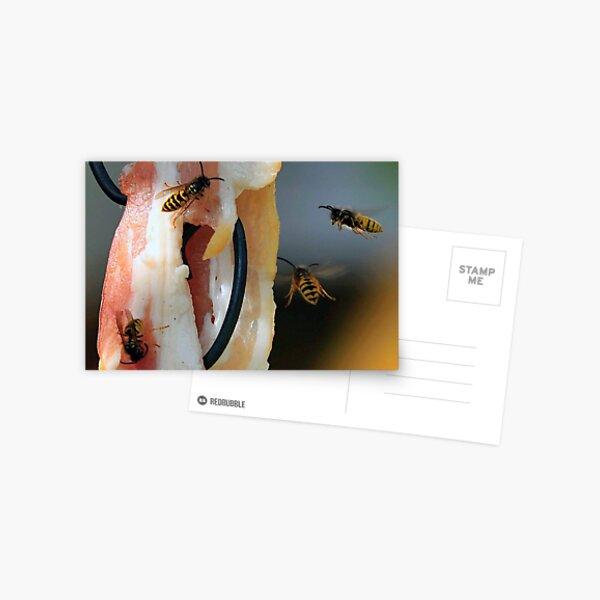 Flying Wasp 0002 Postcard