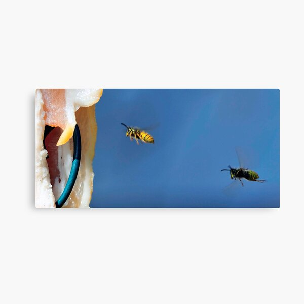 Flying Wasp 0009 Canvas Print