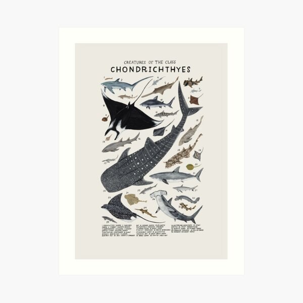 Creatures of the class Chondrichthyes Art Print