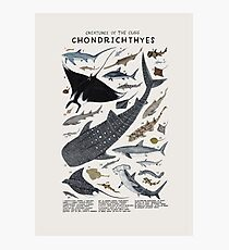 Creatures of the class Chondrichthyes Photographic Print