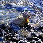 Baby Sea Lion In The Galapagos von Al Bourassa