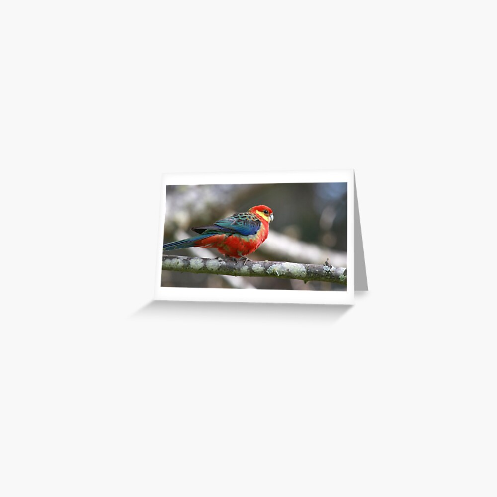 Western Rosella Greeting Card