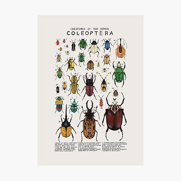 Creatures of the order coleopetera Photographic Print