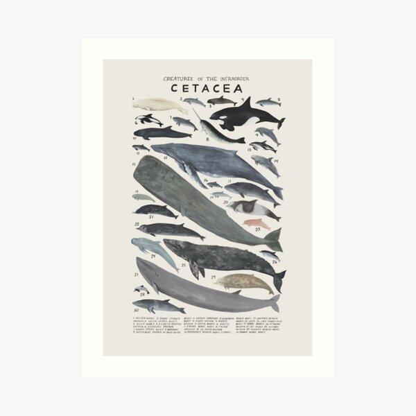 Creatures of the infraorder Cetacea Art Print