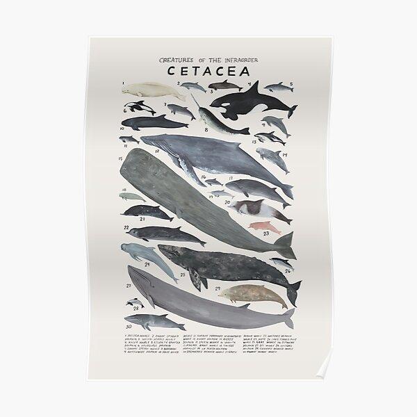 Creatures of the infraorder Cetacea Poster