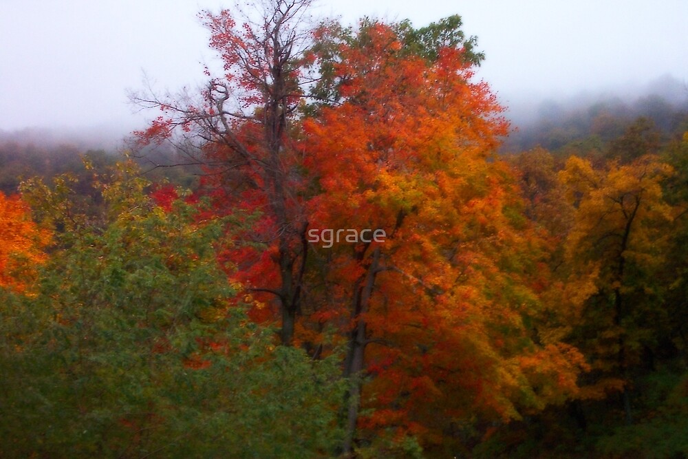 Virginia Trees by Sarah Grace