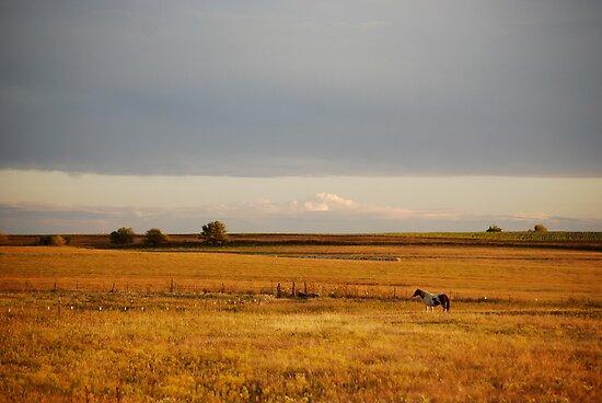 Paint Horse in Autumn by Suz Garten