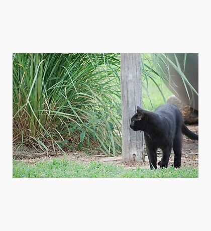 Country Cat Photographic Print